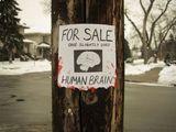 Hirn zu verkaufen