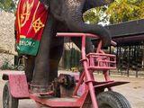 Elefant mit Dreirad
