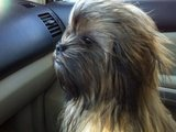 Real Life Chewbacca