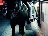 Reiterpolizist am Geldautomaten