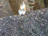Eichhörnchen Posing