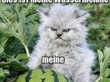 Meine Wassermelone