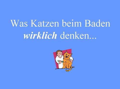 Badende Katzen aus Bayern