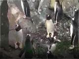 Pinguine jagen Seifenblasen