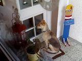 Hund benutzt die Türklingel
