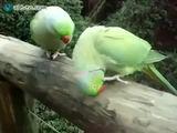 Gesprächige Vögel